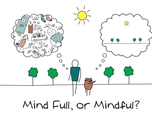 What is Mindfulness? Metta Blog #19